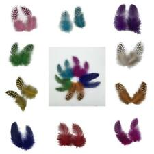 Pack of 50 Dyed Guinea Hen Feather Chicken Feathers Decorations WHOLSALE