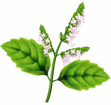 Ambrosial Patchouli Essential Oil Pogostemon cablin Natural India Free Shipping