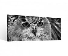 Canvas 1Tlg Owl Bird red eyes Night bird Canvas Picture picture 9P536