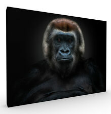 Shes Got The Look Ape Wildlife Art Print by Pedro Jarque, Stretched Canvas