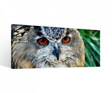 Canvas 1Tlg Owl Bird red eyes Night bird Canvas Picture picture 9P535