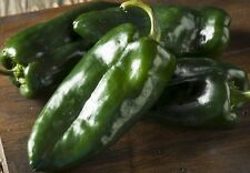 Ancho Poblano Chile Pepper Seeds, Capsicum Annuum, Variety Sizes, FREE SHIPPING