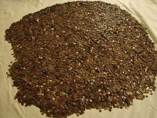 1 POUND LINCOLN WHEAT PENNIES OLD US COIN COLLECTION LOT...