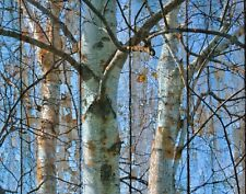 Rustic Home Decor, Birch Trees, Brown Blue Wall Art Home Decor Picture