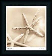 Il Oceano No. 2 by Alan Blaustein Starfish Seashell Art Print Framed