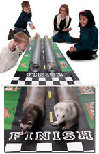 Ferret Racing and Fun with Super Thruway, Raceway and Pop n Play Pit with balls