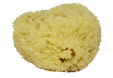 Natural Sea Sponges in various sizes: Grass Honeycomb and Silk