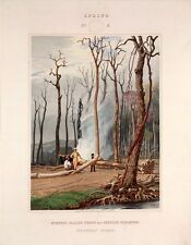 "George Harvey : ""Primitive Forest of America - Spring"" (1841) — Fine Art Print"