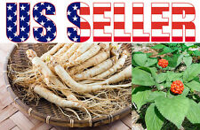GINSENG ROOT SEEDS for Your Immune System, Asian Ginseng/Panax Ginseng from USA