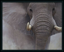 The Power of One John Banovich Grey Elephant Framed Art Print Wall Décor Picture