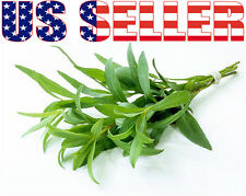 200+ ORGANIC Tarragon Seeds Herb Heirloom NON-GMO Fragrant From USA