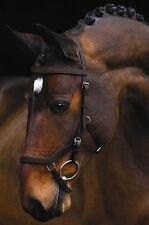 Rambo Micklem Comp Bridle With Reins or Without FEI Approved SBAC9D SBAB4K