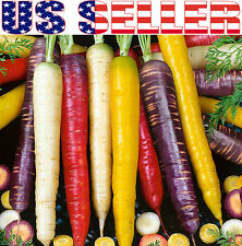 150+ ORGANIC Rainbow Blend Carrot Seeds Heirloom NON-GMO RARE Healthy Flavorful