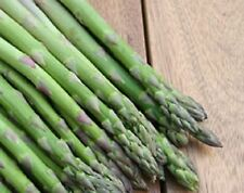 3 - 20 ASPARAGUS CROWNS CHOICE OF VARIETIES 2 YEAR OLD CROWNS READY TO GO OUT