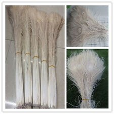 Wholesale 10-200pcs beautiful peacock feather eye (beige) 10-32 inch 25-80 cm