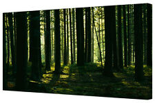 Sunlit Forest Shade Landscape LARGE Green Gallery Wrap Canvas Print Wall Art