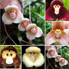 20Pcs Rare Cute Monkey Face Orchid Flower Seeds Potted Plants For Home&Garden