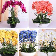 orchid  flower  Phalaenopsis Orchids Seeds (100 PCS)