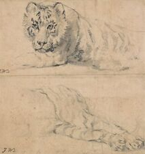 Photo Print Reproduction Studies Of Tiger Above Head & Shoulders Below Hin