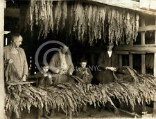 1916 BOWLING GREEN KY TOBACCO DRYING CHILD LABOR PHOTO Largest Sizes