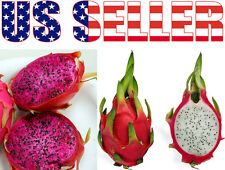 20+/50+ ORGANIC Dwarf Pitaya Dragon Fruit Seeds Pink White Sweet Exotic Healthy!