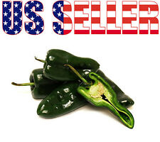 ORGANIC Ancho Poblano Hot Pepper Seeds Maxican Heirloom NON-GMO Mildly Hot