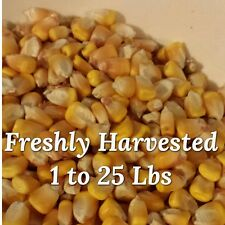 Whole Kernel Dried Corn 1 to 25 lbs- Deer Feed - Squirrel - Bird Feeder - Crafts