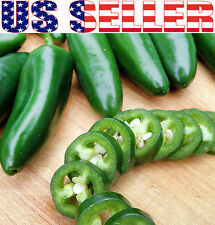 30+ ORGANIC Jalapeno Pepper Seeds Chili HOT Heirloom NON-GMO Spicy Mexican