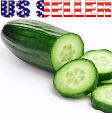 30+ ORGANIC Muncher Cucumber Seeds Heirloom NON-GMO Crispy Sweet Fragrant Sweet