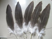 Wholesale beautiful natural feathers 10-50 pcs 35-40 cm /14-16inche rare feather