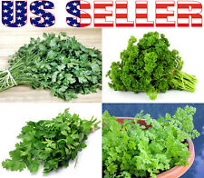 ORGANICALLY GROWN Parsley Heirloom NON-GMO Curled Italian Large Leaf Giant USA
