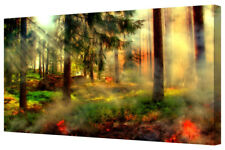 Misty Red/Green Forest Sun Rays Sunlight Tree LARGE Box Canvas Art Print Picture