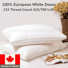 100% Cotton European White Down Pillow 1 Piece Filled in Canada