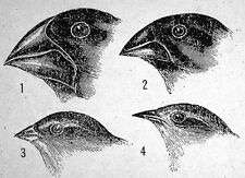 Charles Darwin's Finches Evolution Science T-shirt