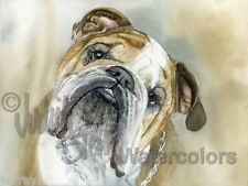English Bulldog Dog Art Print of Watercolor Painting Artist Judith Stein Signed