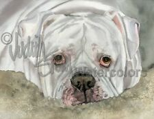 Johnson American Bulldog Dog Art Print Watercolor Painting Judith Stein Signed