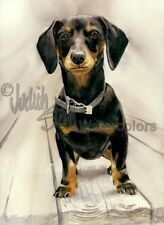 Dachshund Doxie Wiener Dog Art Print of Watercolor Painting Judith Stein Signed