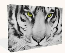 Animal Big Cat  White Tiger Face Print Wall Art Premium Modern  Picture Framed
