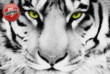 """Animal Big Cat White Tiger Face Poster Print Wall Art Photo Picture 20"""" x 16"""""""