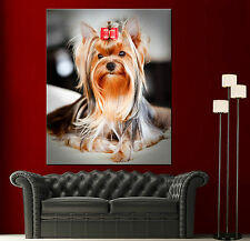 Canvas Prints Yorkshire Terrier Home Wall Art Photo Print Colorful Picture 2 1
