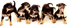 New High Quality  Cute Puppies, Dogs Puppy Canvas Animal Canvas  Panoramic Print