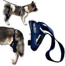 ORTHOPAEDIC BRACE FOR DOGS FOR KNEE RIGHT OR LEFT BALTO BT JUMP