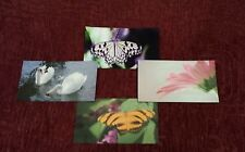 Photograph Magnet Vibrant Color Nature Flower Butterfly Refrigerator File
