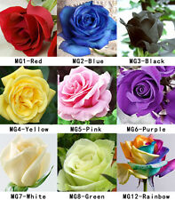 100 Colorful Rare Fresh Rose Seeds Beautiful Rose Flower Seed For Your Lover