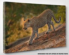 X LARGE CANVAS Leopard Cub Walking Down The Rocks Animal Photo Picture Wall Art