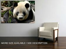 Canvas Print Picture Lovely Panda Bear  /Stretched-ready to hang