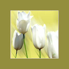 White Tulips Matted Fine Art Print Botanical Floral Nature Plant