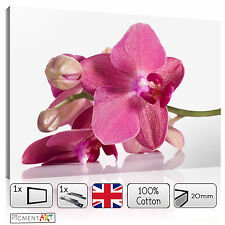 LARGE ORCHID PETALS FLOWERS MODERN LOVE CANVAS WALL ART FRAMED PRINTS PICTURES