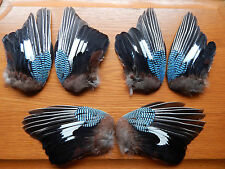 3 Pair Dried Jay Wings Bird Wings Fly Tying Arts Crafts Taxidermy