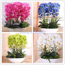 100pcs orchid,orchid seeds,phalaenopsis orchid,bonsai hydroponic flower seeds...